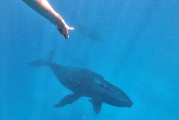 8 Best Whale Swim Tours on Tongatapu