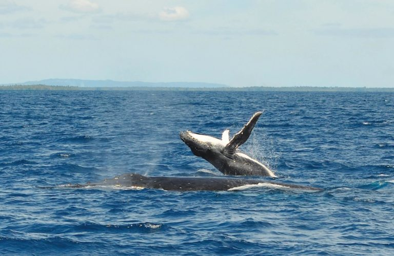 10 Best Whale Swim Tours in Vava'u