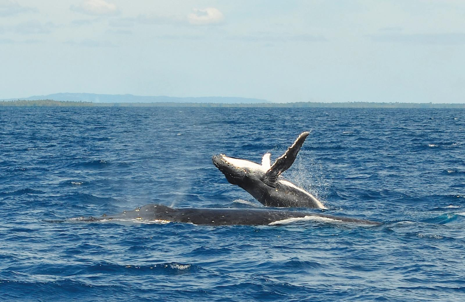 10 Best Whale Swim Tours in Vava'u