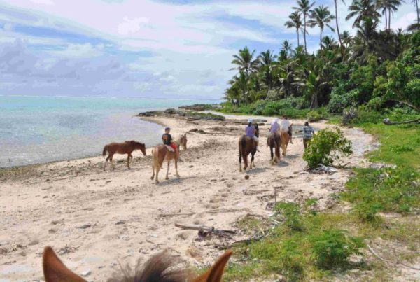 Tonga Family Itinerary: 7 Days