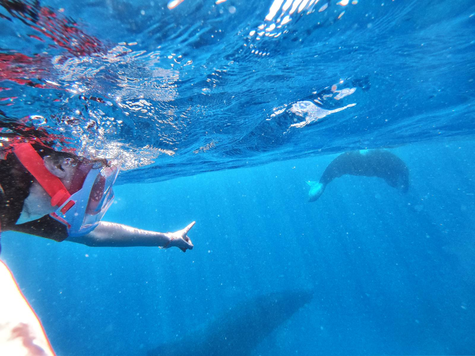 The Best Whale Tours in 'Eua