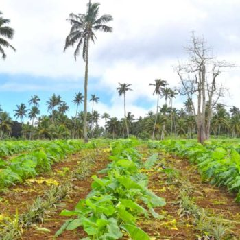 The Foodie Guide to Vava'u