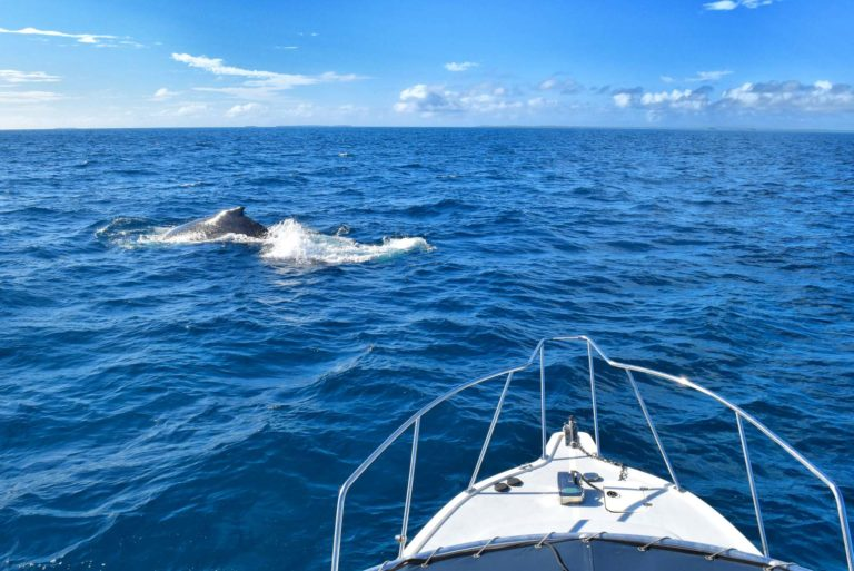 5 Best Whale Swim Tours in Ha'apai