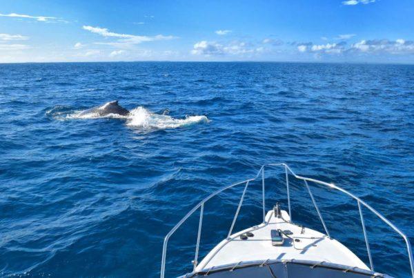 5 Best Whale Swim Tours in Ha'apai