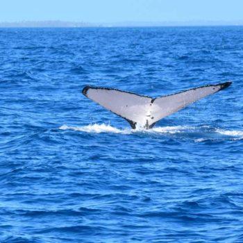 Tonga Honeymoon Itinerary: 5 Days