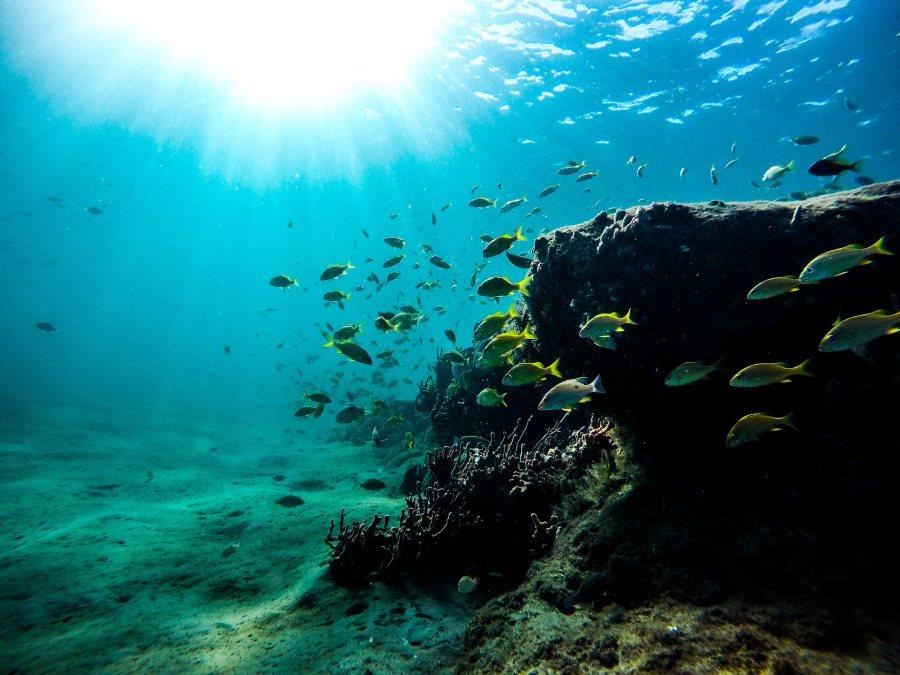 Sea Fish Coral Snorkel Scuba Pixabay Small