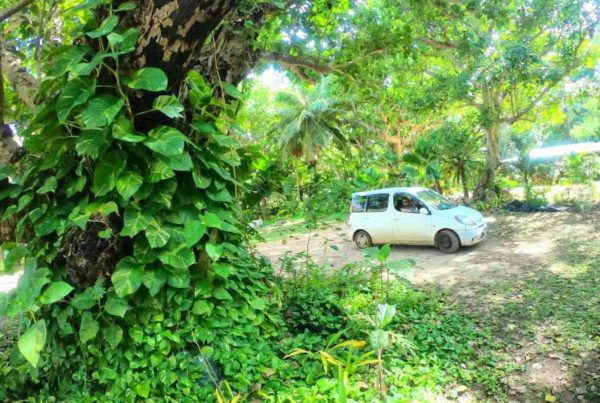 The Best Car Rentals in Vava'u