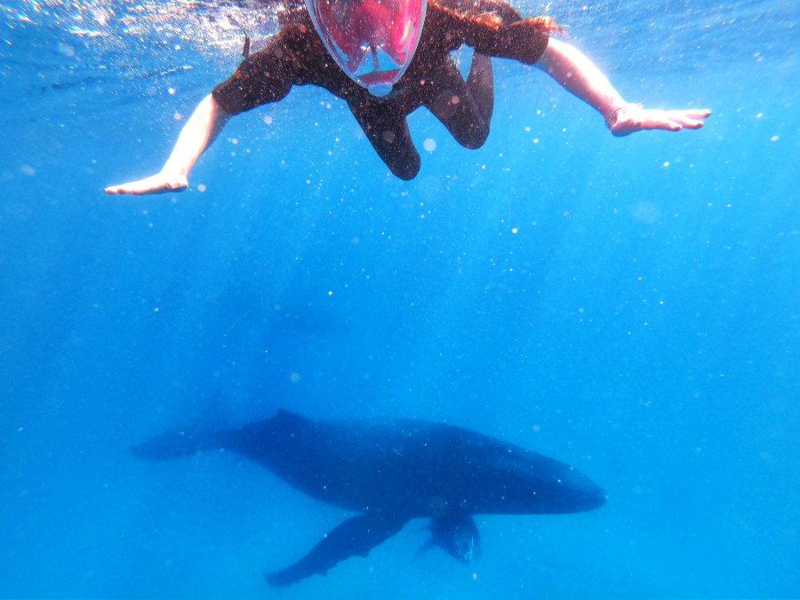 10 Amazing Reasons to Visit Tonga