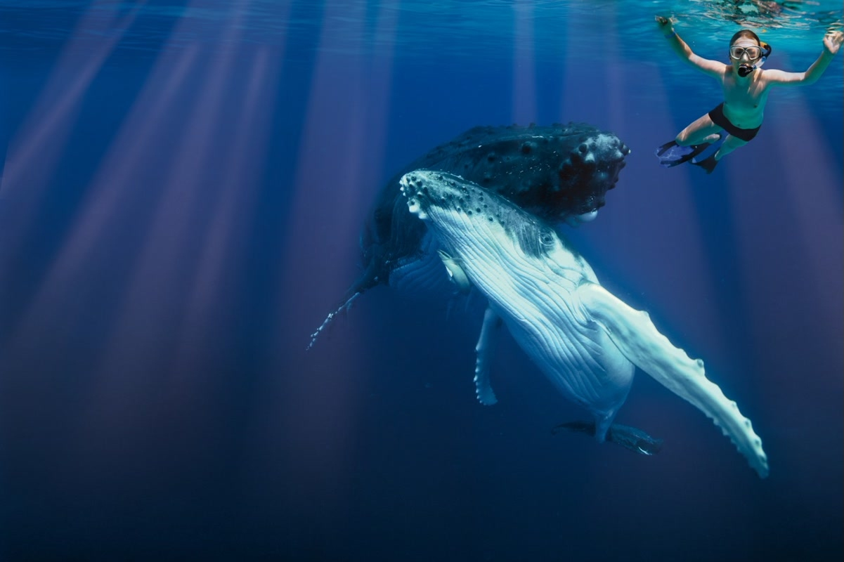 The Best Place to Swim with Whales in Tonga