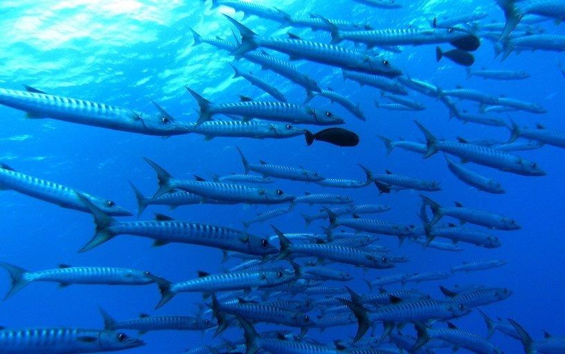 8 Fishing Tips for Tonga