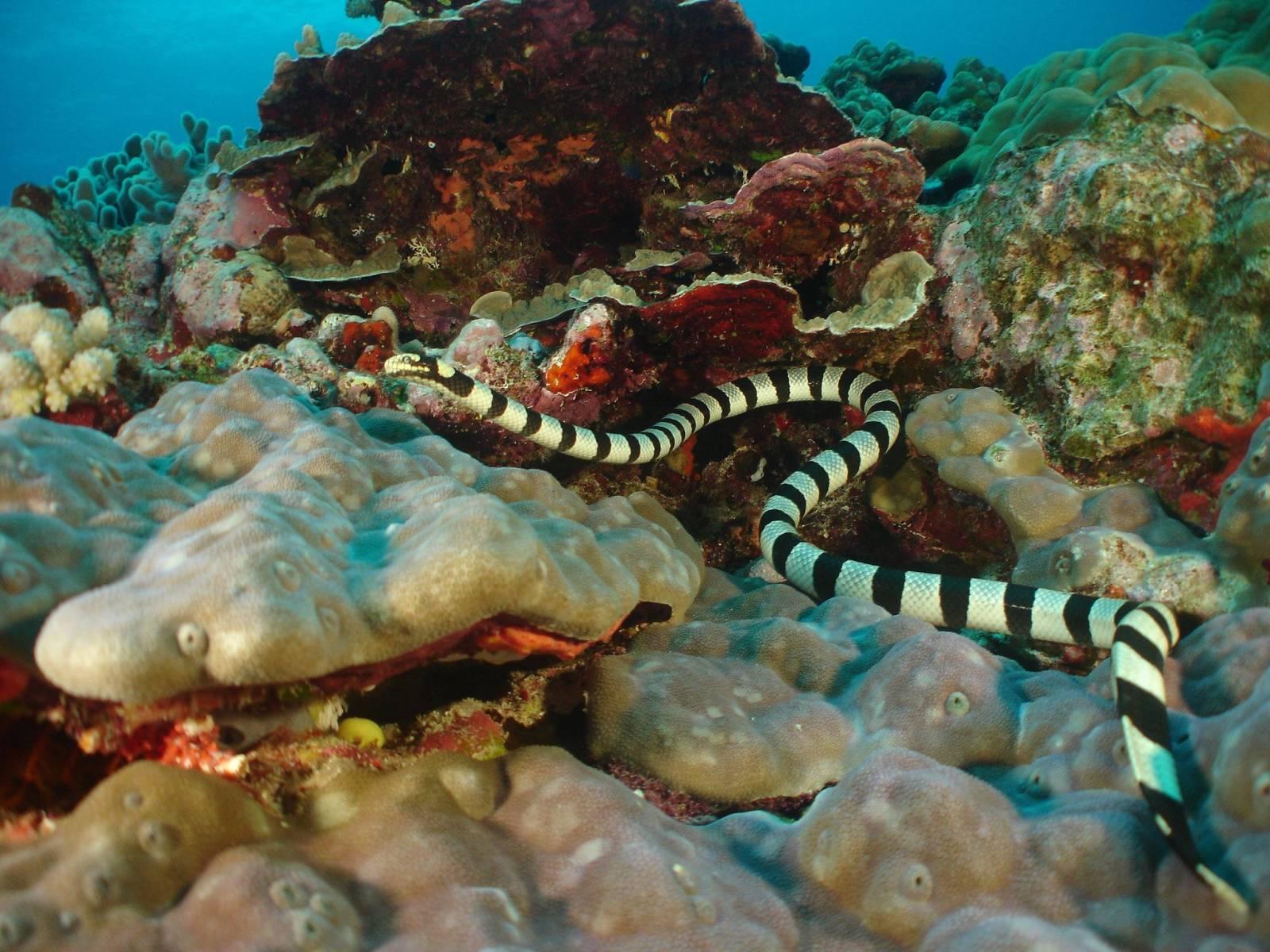 10 Best Dive Sites in Tonga