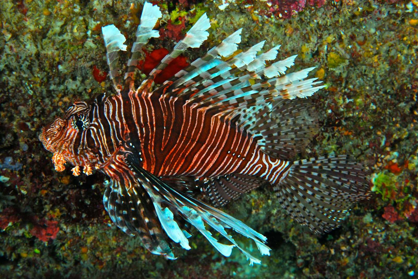 5 Best Dive Sites in Ha'apai