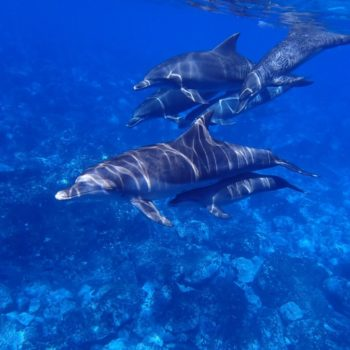 Where to See Wildlife in Tonga
