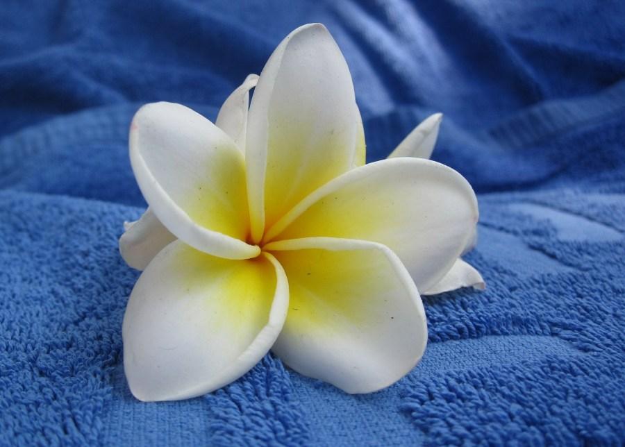 7 Best Surf Resorts in Tonga