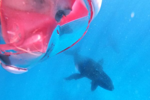 10 Tips for Swimming with Whales in Tonga