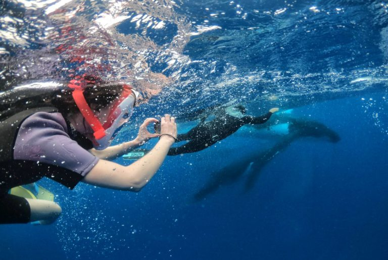 10 Best Whale Swim Tours in Tonga