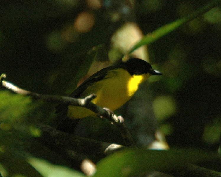 10 Animals & Birds Found in Tonga