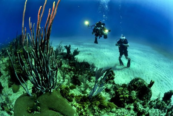 The Best Scuba Diving Tours in Ha'apai
