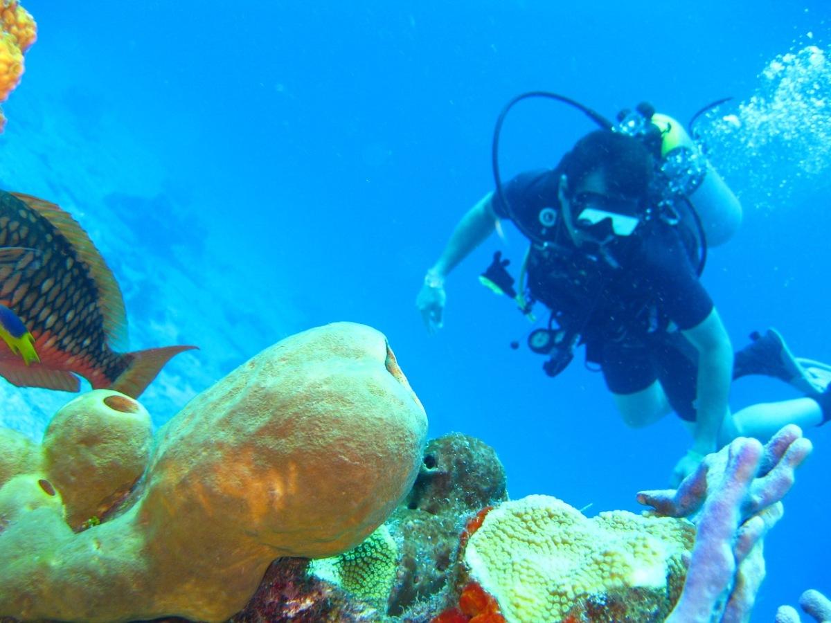 9 Best Scuba Diving Tours in Tonga