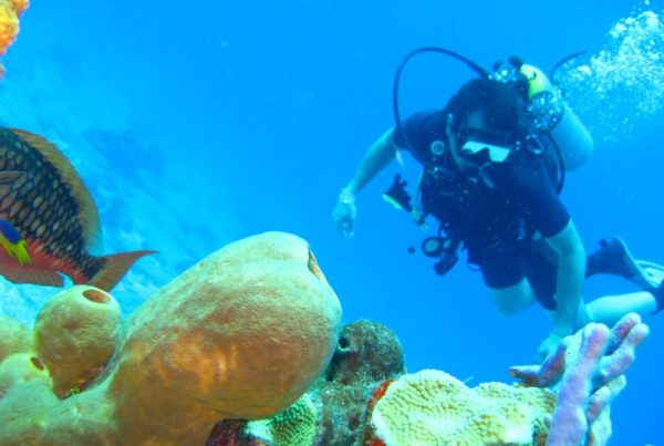 9 Best Scuba Diving Tours in Tonga