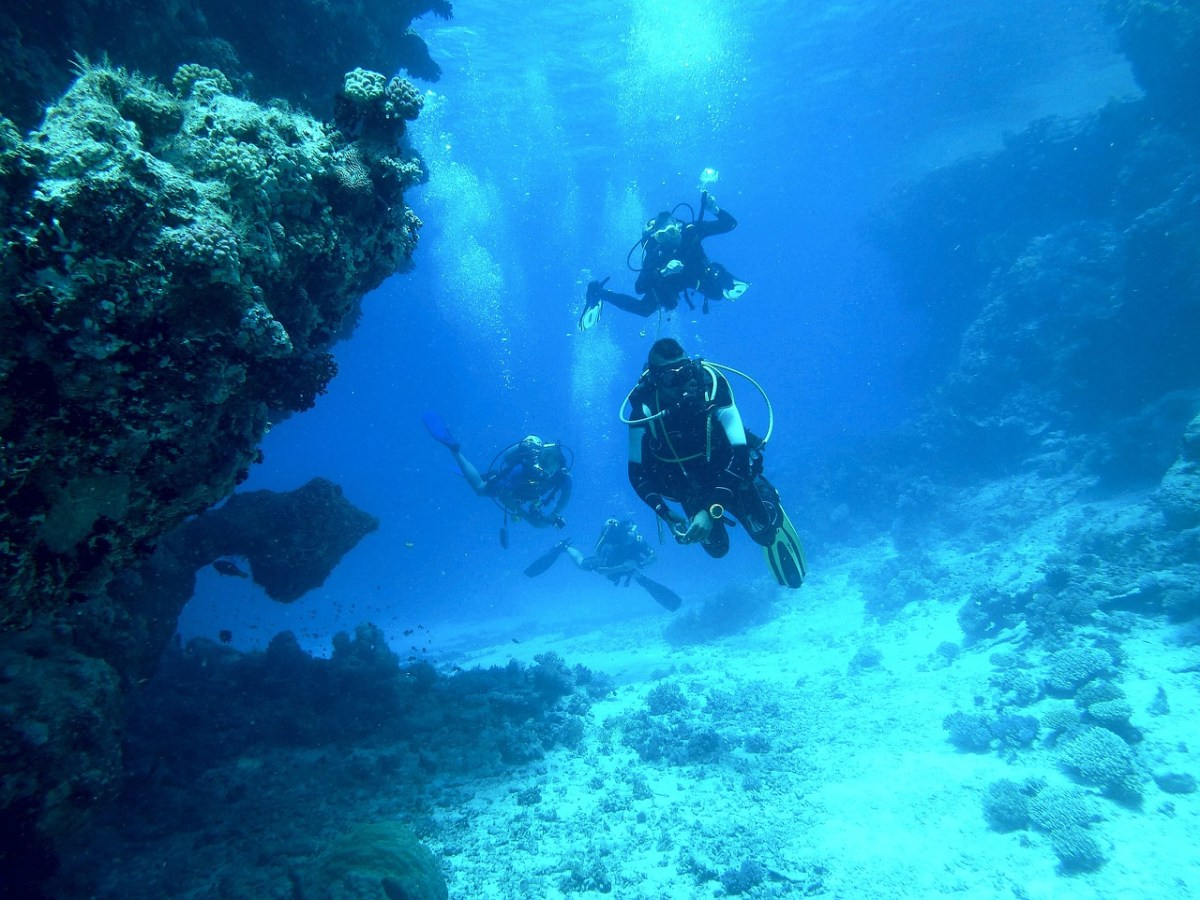 10 Best Dive Sites in Vava'u