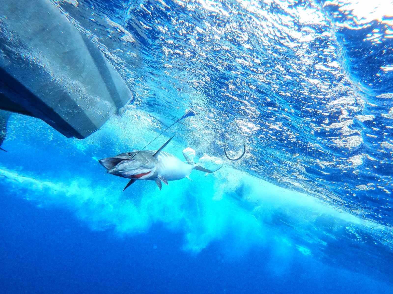 What Types of Fish Can You Fish for in Tonga?