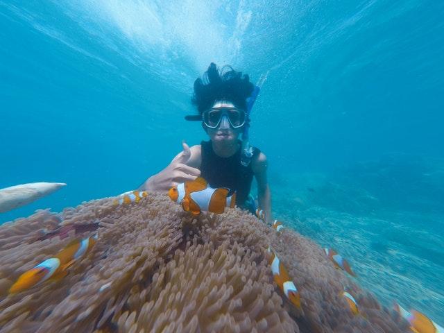 Snorkel And Scuba Dive Tours In Haapai Credit Pexels