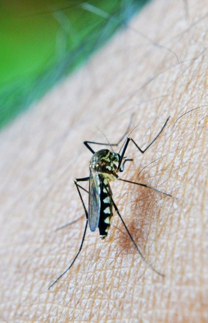 10 Best Natural Mosquito Repellents for Tonga